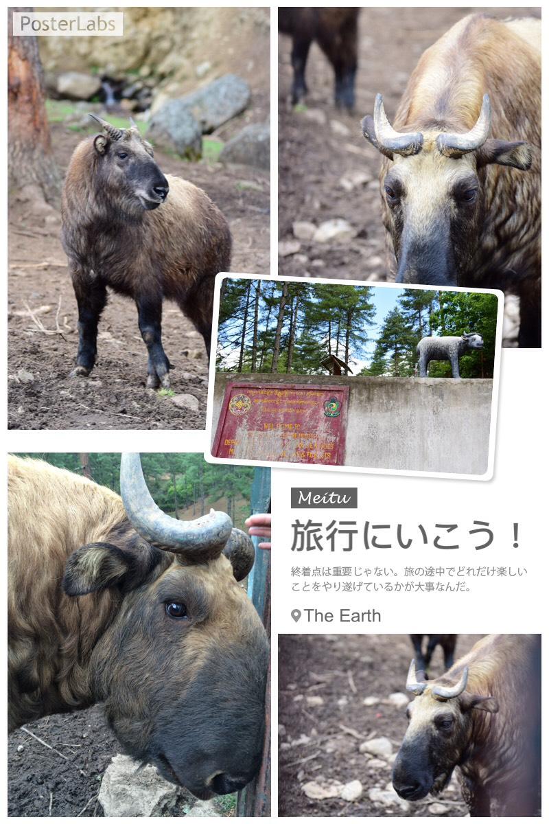 新加坡动物园四不像